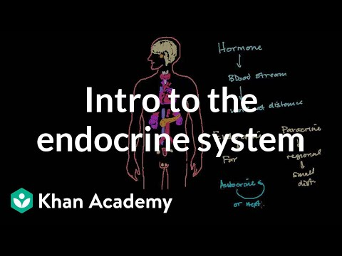 Intro to the endocrine system | Health & Medicine | Khan Academy