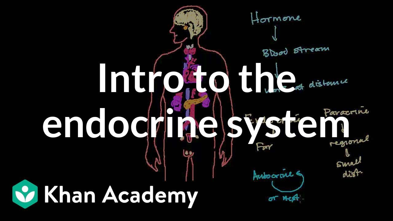 Intro To The Endocrine System Video Khan Academy