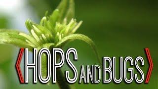 Pests on Hop Plants