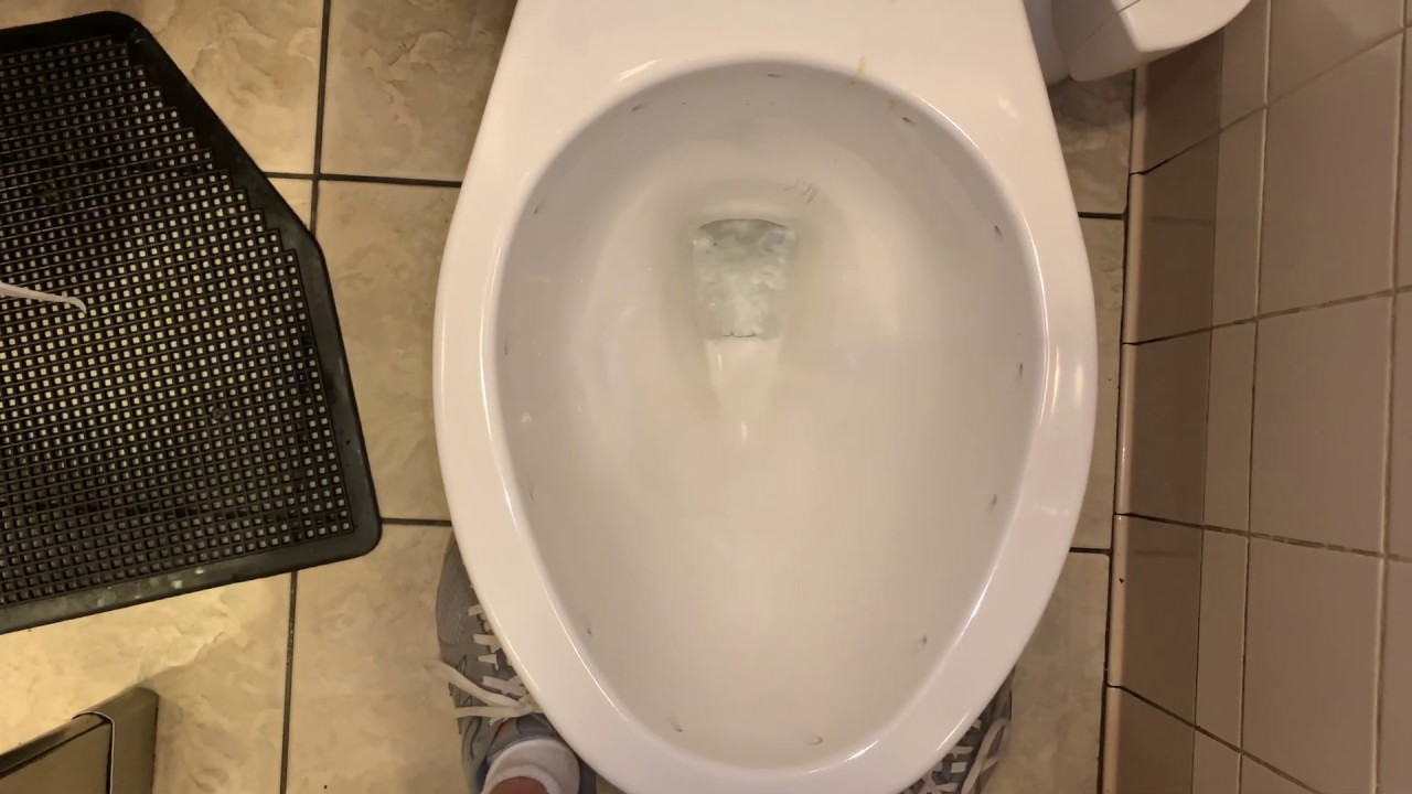 🚽 bathroom tour at a Restaurant in St. Louis