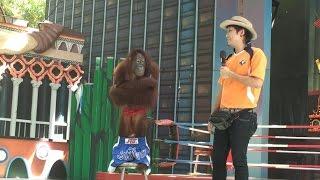 """Шоу орангутанов, часть 1. Orangutan show 1. """"Safari World"""", Бангкок, Таиланд"""