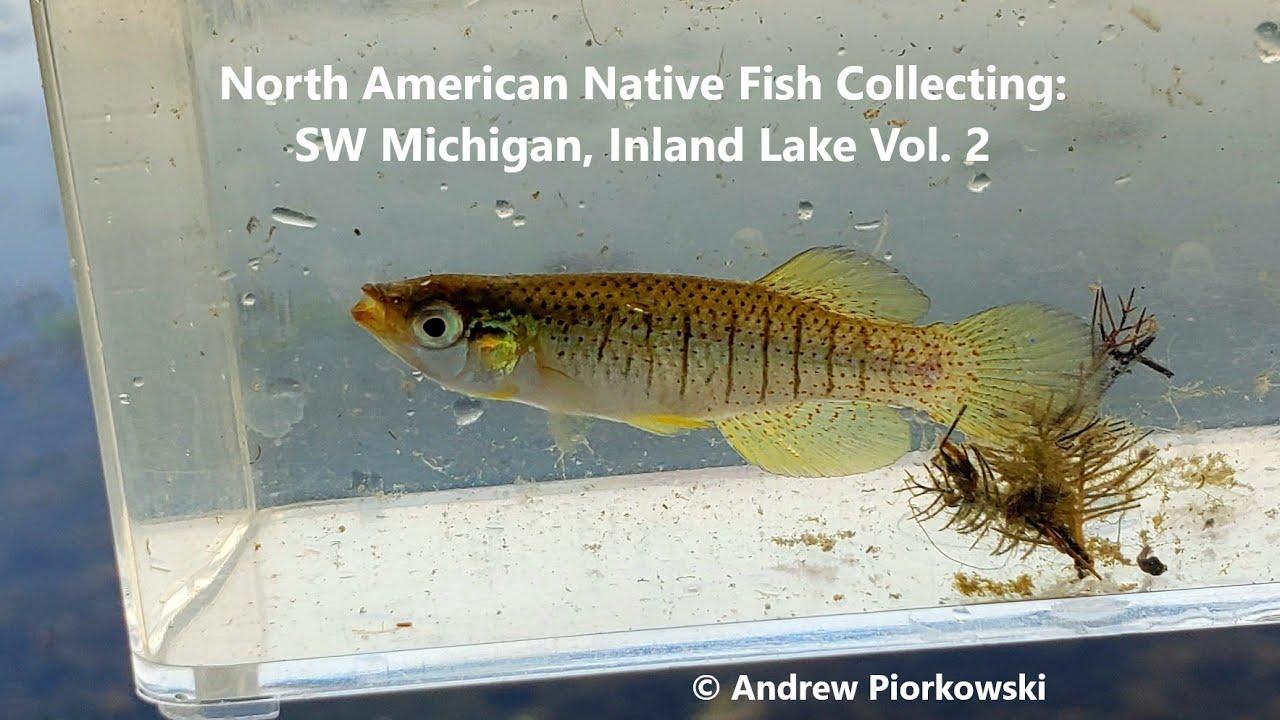 North American Native Fish Collecting, SW Michigan 2019: Fundulus, Turtles,  & More!