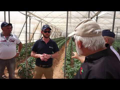 Выращивание перца Израиль