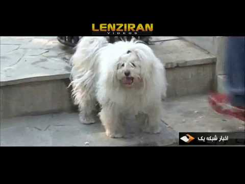 Islamic Republic officials against dogs