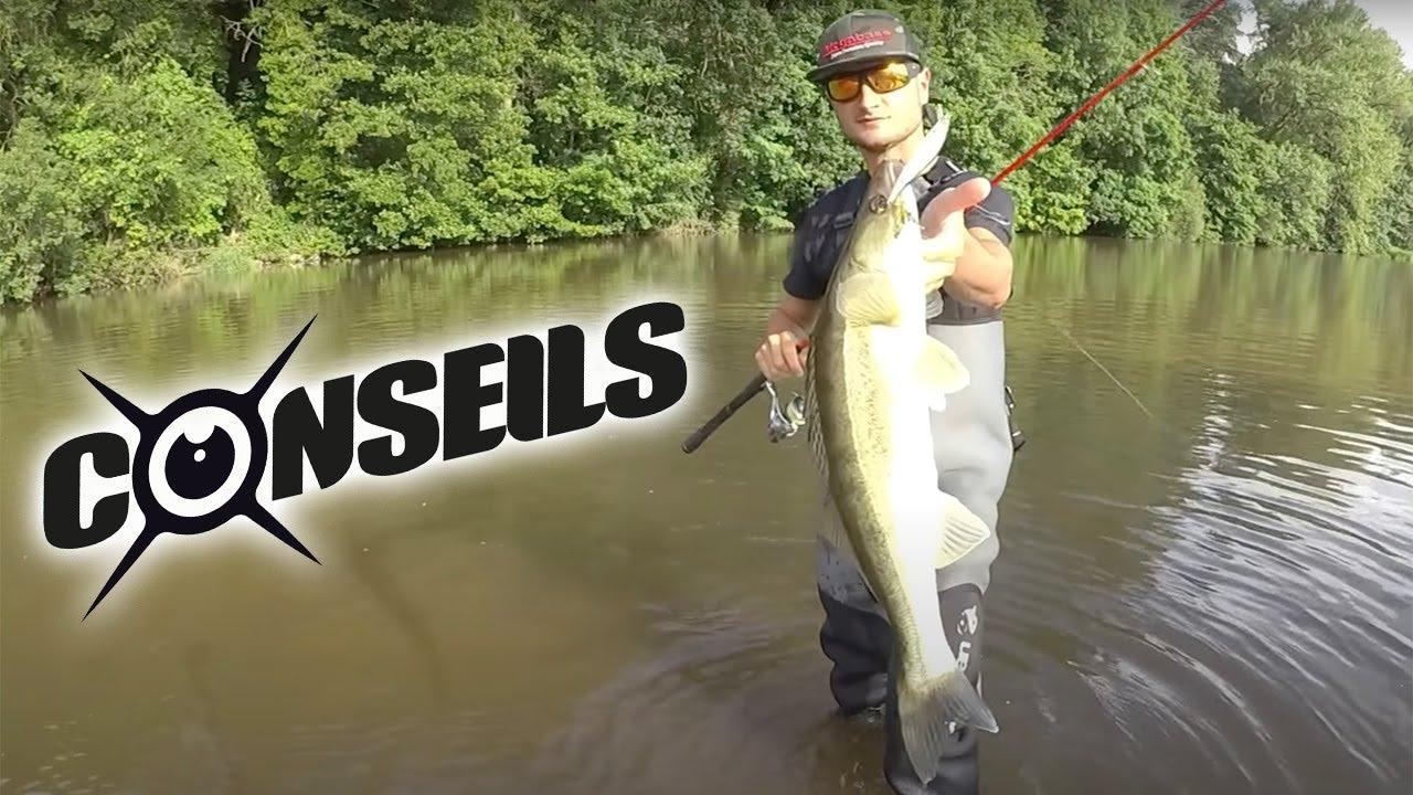 La p che du sandre au poisson nageur depuis le bord youtube - Peche du poisson chat au coup ...