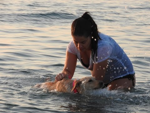 Rescuer takes her foster dog swimming every day to help her walk again