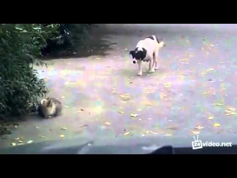 Кошки против собак (2001) смотреть онлайн бесплатно
