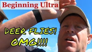 Trail running tips for the ultra marathon runner: Dealing with deer flies