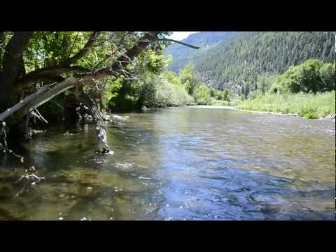 Fly Fishing The White River - Colorado Info Video