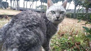野良猫が「ついてきて!」と言うのでついていってみたら thumbnail