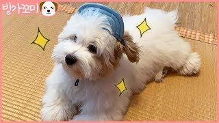 [방가꼬미] 뽀송함이 폭발하는 강아지 (Hair care for dog) - Hi GGOMI!