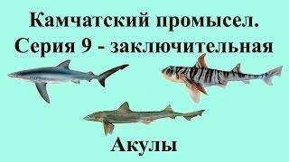 Русская Рыбалка 3.99 Камчатский промысел 9 - Акулы - Заключение
