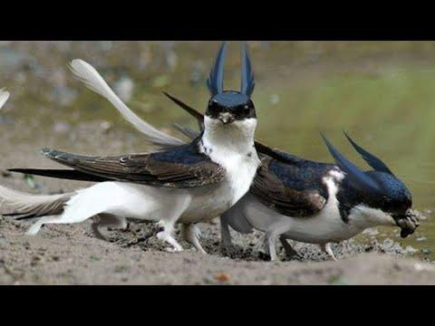 Dünyanın En Tehlikeli Kuşları.. 1 Numarayı Görünce Dilinizi Yutacaksınız.
