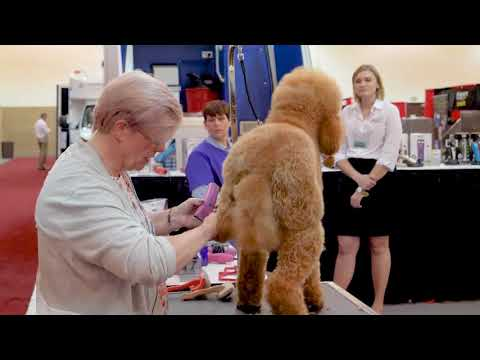 Poodle Feet Trim with Lisa Leady