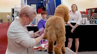 Poodle Feet Trim with Lisa Leady