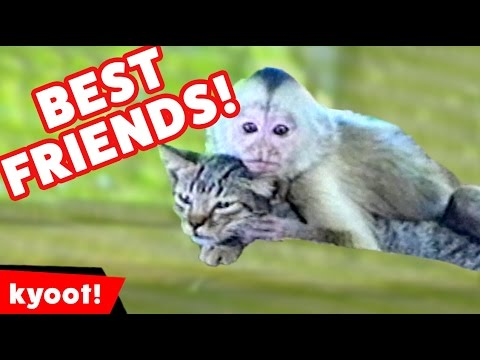 Top Cutest Videos of Different Pets & Animals Becoming Besties Compilation | Kyoot Animals