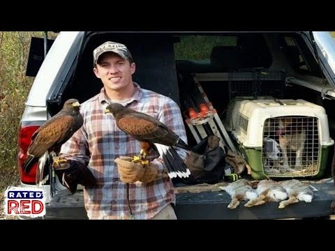 We Go Rabbit Hunting With A Falconer And His Two Harris Hawks