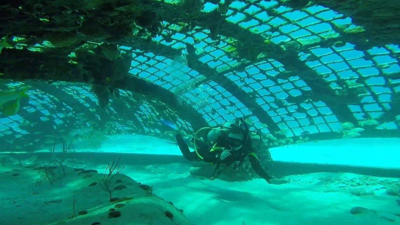 Turks & Caicos Scuba Diving At Thunderdome 2