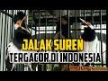 Jalak Suren Gacor  Mp3 - Mp4 Download