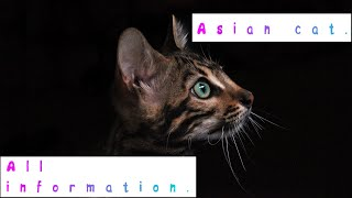 Asian cat. Pros and Cons, Price, How to choose, Facts, Care, History
