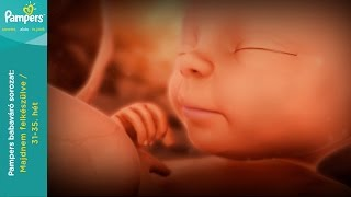 Várandósság hétről hétre: Terhesség 31.-35. hét