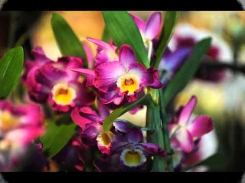 Kwiaty Swiata