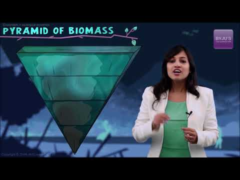 Biology Concept Explained | Pyramid of Biomass