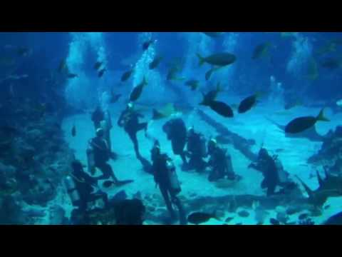 Open Water Diver Course at S.E.A. Aquarium Resorts World Sentosa, Singapore (30 Apr 2016)