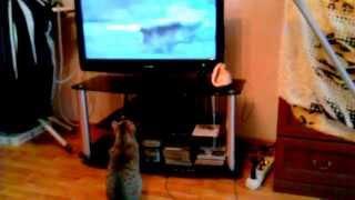 Котёнок смотрит Animal Planet
