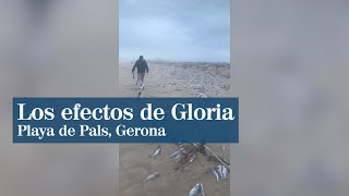 Así ha quedado la playa de Pals, Gerona, tras el paso del temporal Gloria