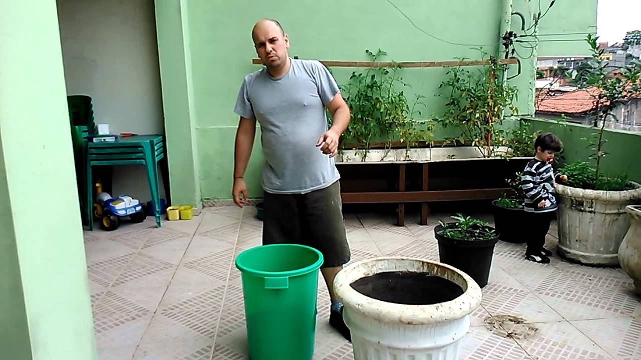 Como plantar rvores frut feras em vasos youtube for Como cultivar peces en casa