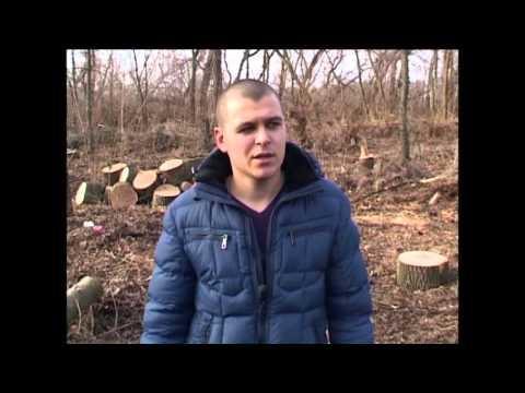 0 Под Марьяновкой СБУ блокировала незаконную вырубку леса