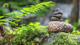 3 Hours Healing Music for The Body & Soul: Relaxing Music, Calming Music, Meditation Music