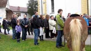 blagoslov konj 2012 Nova Cerkev