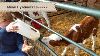 VLOG: Ферма для детей в Англии