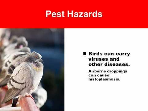 Pest prevention training presentation for health care facility staff