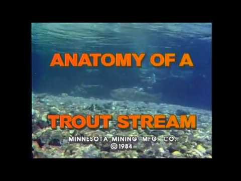 Scientific Anglers: Anatomy of a Trout Stream DVD | AvidMax - YouTube