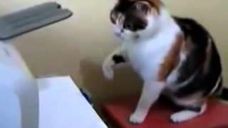 Приколы с кошками Кошка против Принтера!  Cat vs  Printer  Смотри!