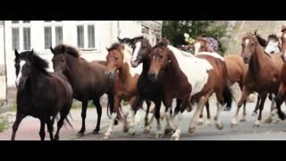 Ostwind 2015 Лошади скачут по улице