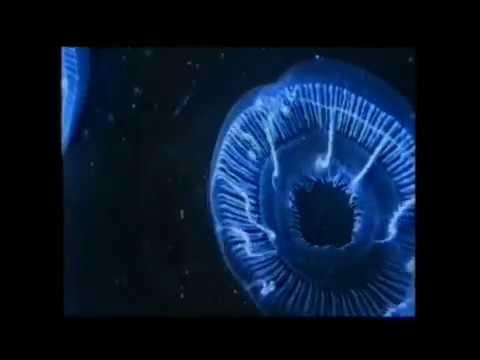 Philip Glass - The Beginning (Anima Mundi)