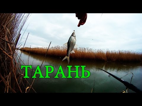 маховая ловля рыбы