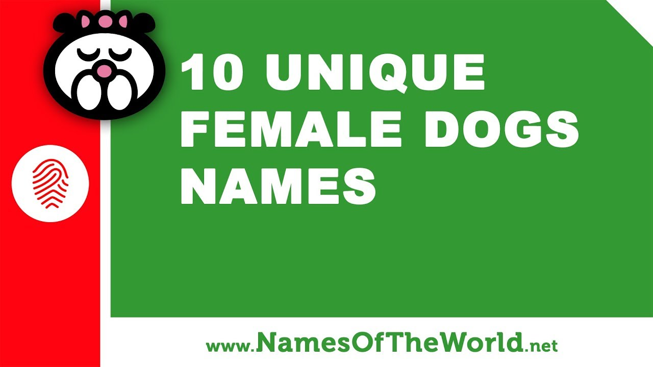 10 unique female dogs names - the best pet names - www namesoftheworld net