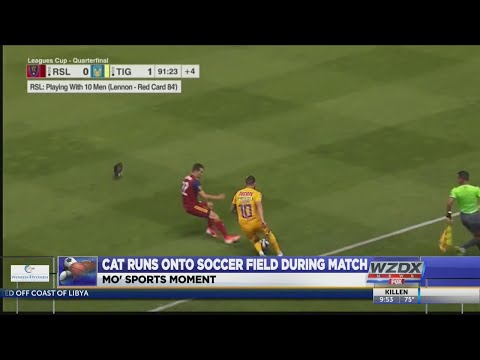 Mo Sports Moment: Cat Executes Perfect Run In The Channel During RSL-Tigres Leagues Cup Game