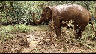 Asia News Network: The gentle giants of Mondulkiri, Cambodia