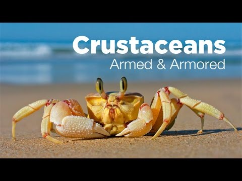 Armed and Armored:  The Amazing Evolutionary Story of Crustaceans