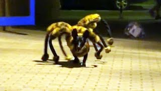 Mutant giant spider dog prank terrifies people