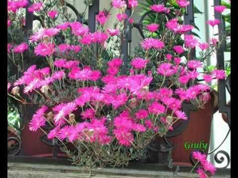 Le Mie Piantine Grasse   Piante Succulente   Il Guardiano Del Faro