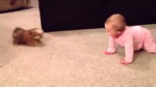Cea mai amuzanta cearta are loc intre un bebelus si un caine