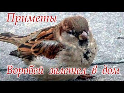Воробей постучал в окно #Приметы #Светлана_Веда