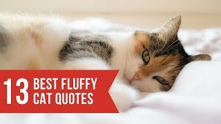 Funny cats and cat quotes and sayings